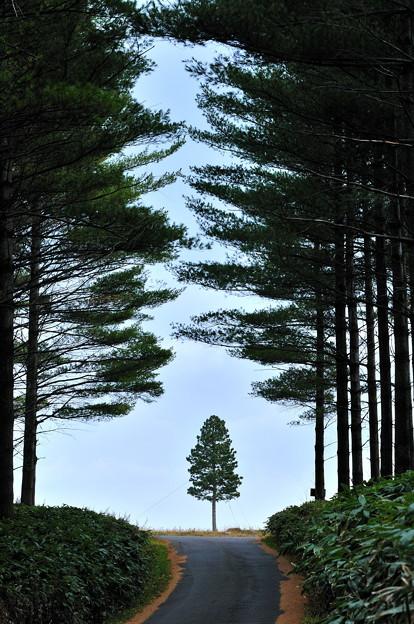 一本の可愛い立木