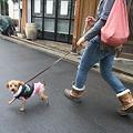 Photos: 歩いてトライアル先なんて・・