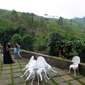 写真: 茶畑と記念写真