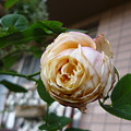 Photos: 2011.11 garden 078
