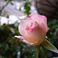 Photos: 2011.11 garden 079