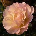 Photos: 2011.12 garden 001