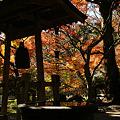 写真: 覚園寺境内の紅葉!(111210)