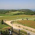 Photos: 110514-32ポピーの畑