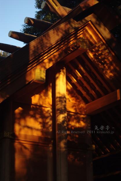 Photos: 優しい光
