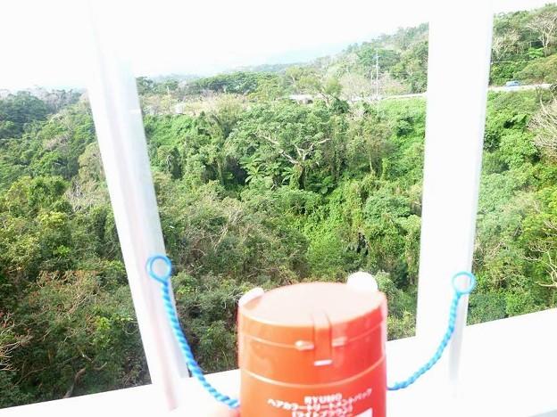 おお、これが沖縄の森か!