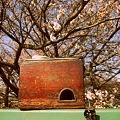 燗銅壺と花見 翔鶴