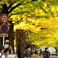 秋 北海道大学