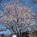 Photos: 山鹿さくら園(5)