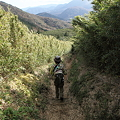 IMG_5356金時山登山・仙石原のすすき