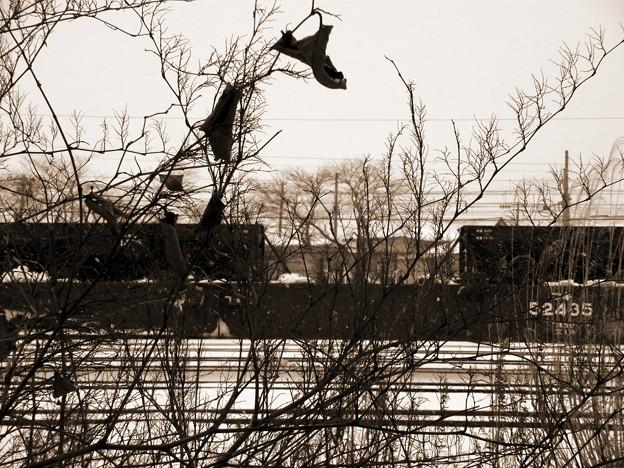 枯れ枝と貨車 モノクロ加工