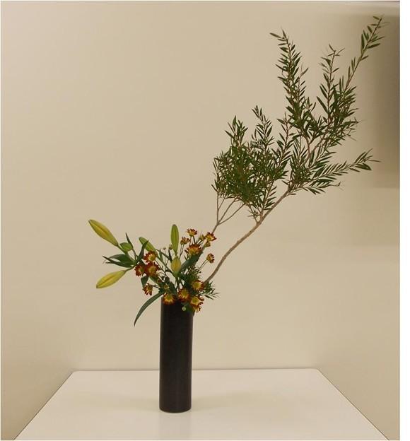 金宝樹、スカシユリ、小菊
