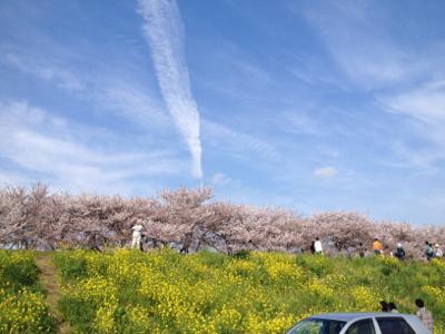 熊谷お花見1