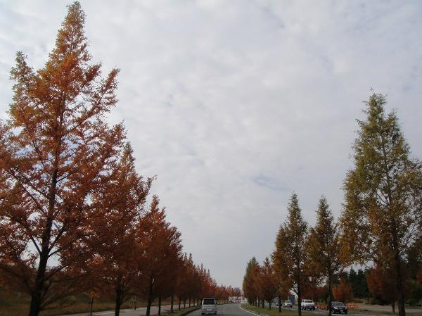 秋色の並木道