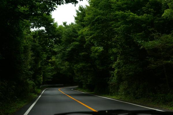 緑に囲まれた道を南下する