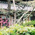 日本家屋に咲く梅