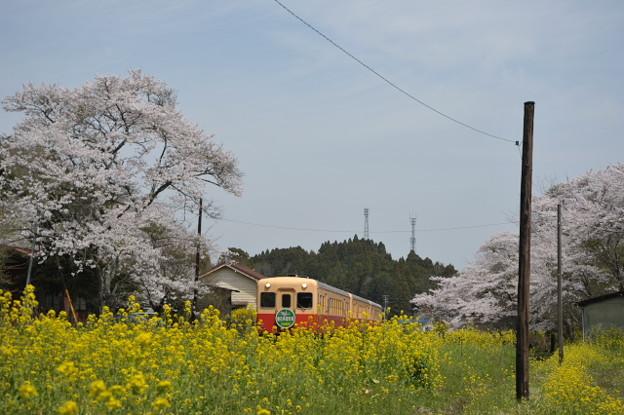 写真: 3SA_3965