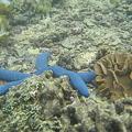 Photos: 相方撮影の熱帯魚16