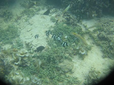 相方撮影の熱帯魚27
