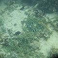 写真: 相方撮影の熱帯魚27