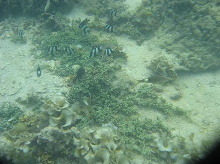 相方撮影の熱帯魚28