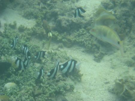 相方撮影の熱帯魚29