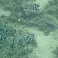 写真: 相方撮影の熱帯魚29