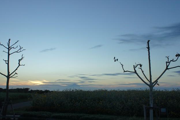 写真: 20110918_174254_0